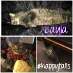 Layla now Pickle  Image